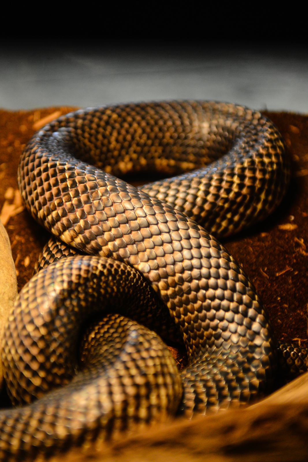 If it's a little good ol' fashioned fun you're after, Monroe's very own Reptile Zoo is a foolproof way to get your kicks. From a two headed turtle to an albino alligator,  there's lots to see here. The Reptile Zoo is 35 miles northwest of Seattle and is jam packed with peculiarly named snakes (you can't beat Ekans and Draco), spiders (one resident here goes by the name of Lawfunduh), soft shelled turtles and more. More info, visit their website. (Image: Chona Kasinger / Seattle Refined)