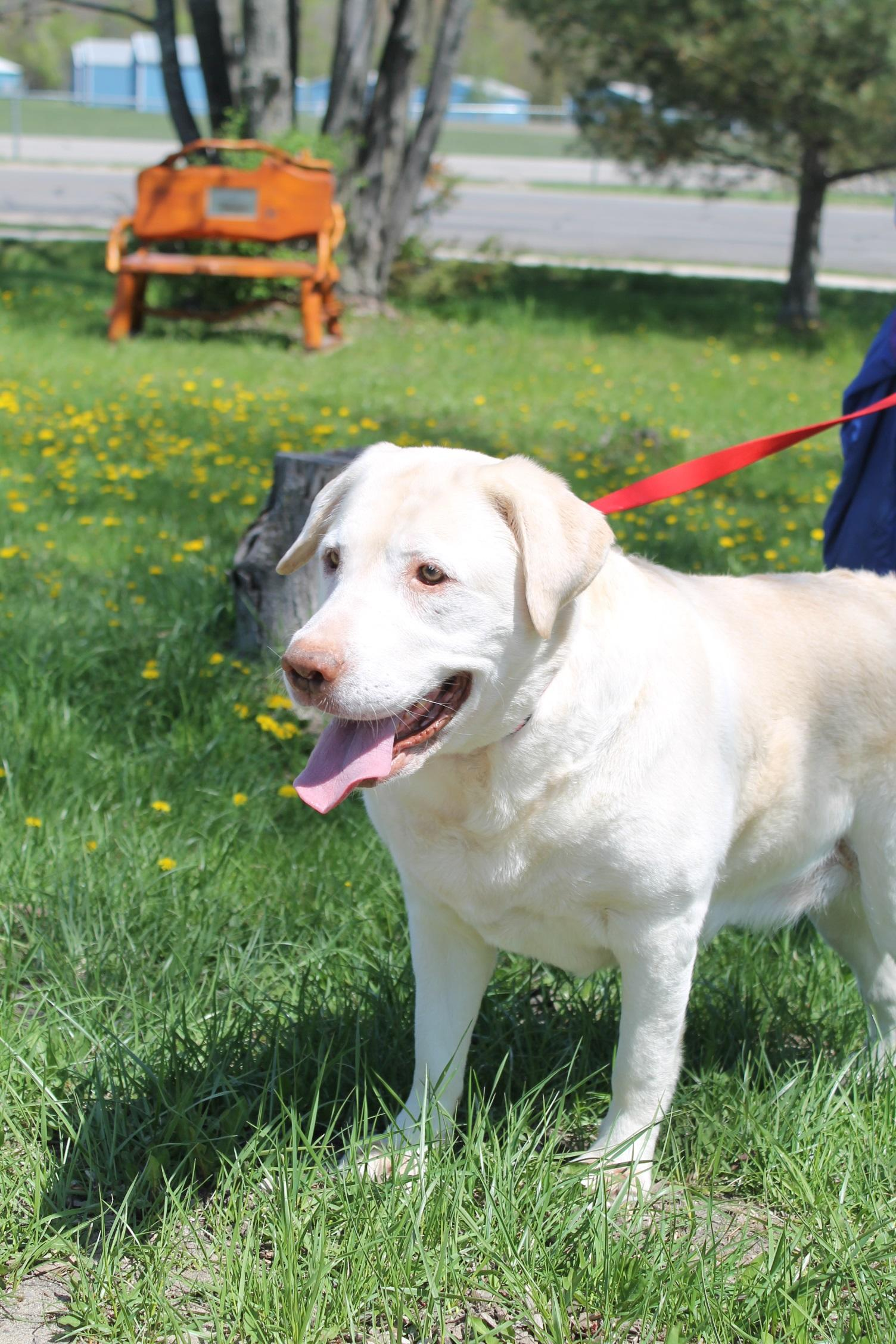 Meet Carly at Charlevoix Area Humane Society in Boyne City.