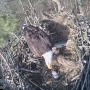Eagle cam: Second eaglet in Platte River State Fish Hatchery nest dies