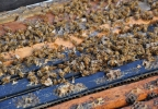 This winter, Big Honey lost 23 percent of its hives. (WLUK/Ben Krumholz)