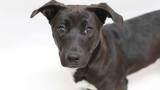 GALLERY: Free adoptions offered this week at Metro animal shelter