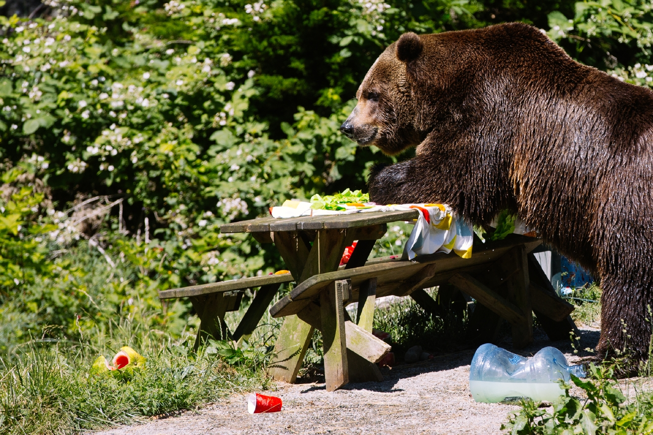 Photos Bears tear apart a birthday party for WPZs Bear Affair