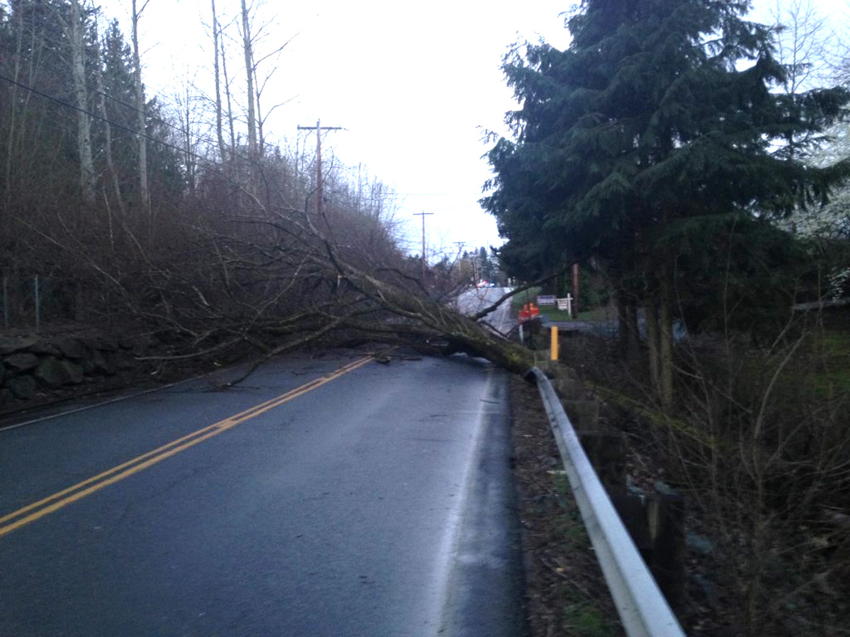 Downed tree closes 88th Street NE in Marysville. Photo from Marysville Police