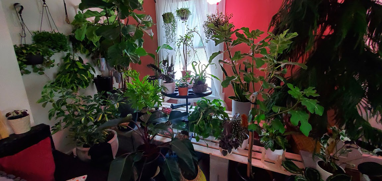 "Hannah Fitz (IG: @crafts_n_caffeine_plz) from CUF / ""I began collecting about two years ago, and the collection quickly grew to the 300 plants that have taken over my entire house, not just this room. This room is intended to bring as much of the outdoors as I can to a place I see every day."" / Image courtesy of hannah Fitz // Published: 6.30.20"