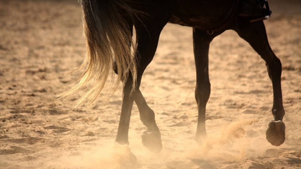 Horse advocates oppose federal plans to spay wild horses | KATU