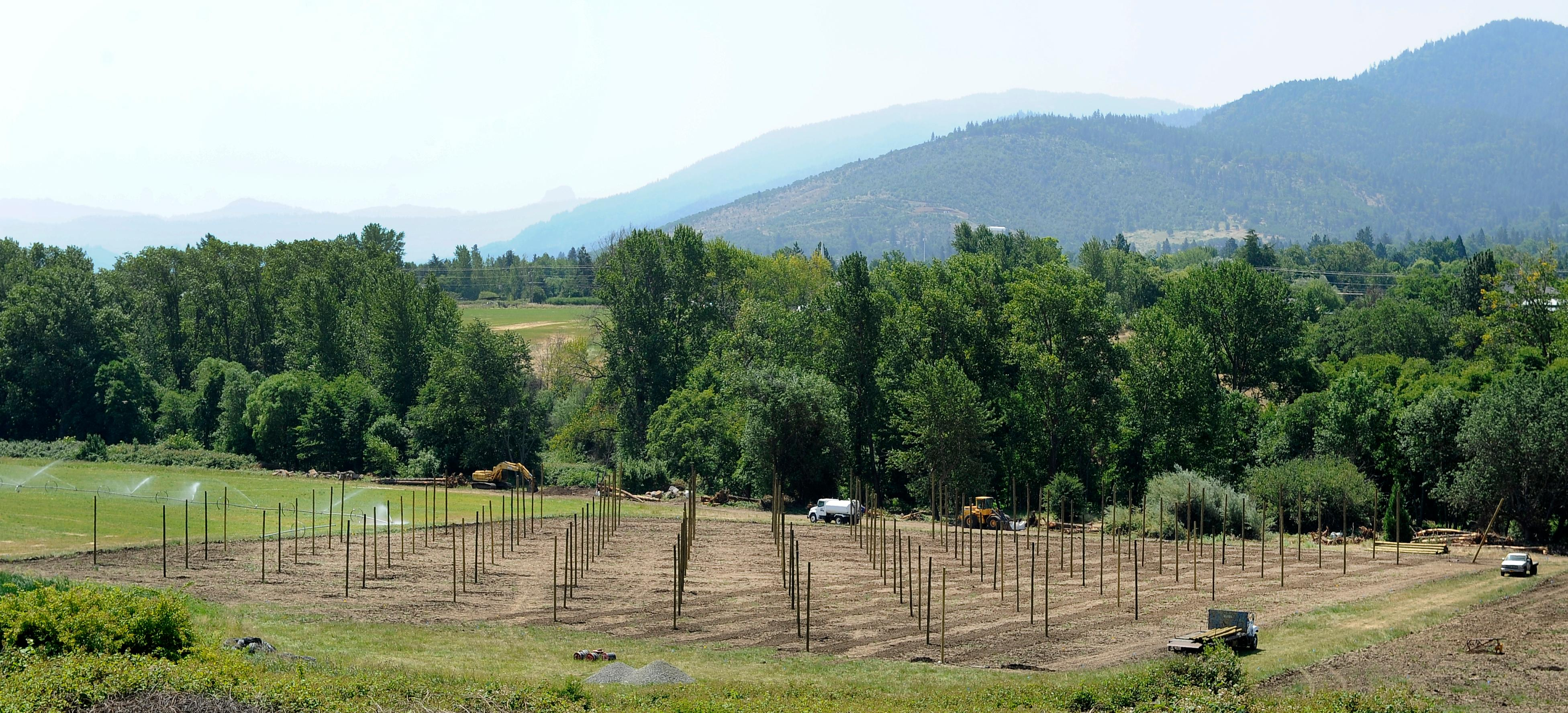 Andy Atkinson / Mail Tribune<br>The view off Interstate 5 of the hop field in Ashland for Base Camp Brewing in Portland.
