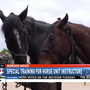 Border Patrol horse unit instructors complete training course
