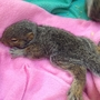 April 14: Baby squirrels rescued at auto dealer, Royals choose photog, new fish discovered