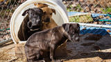 16 dogs saved from Middle Tennessee dog fighting ring