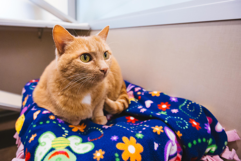 Seattle Humane Society Free Cats
