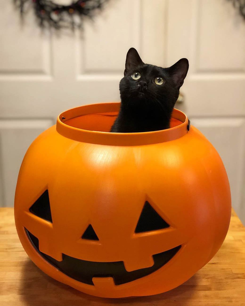 <p>Is there anything more kitty-iconic than a black cat in a pumpkin? We think not. This spooky guy is named Luey, short for Lugosi. / Image courtesy of Instagram user @acurehead // Published: 1.13.19</p>