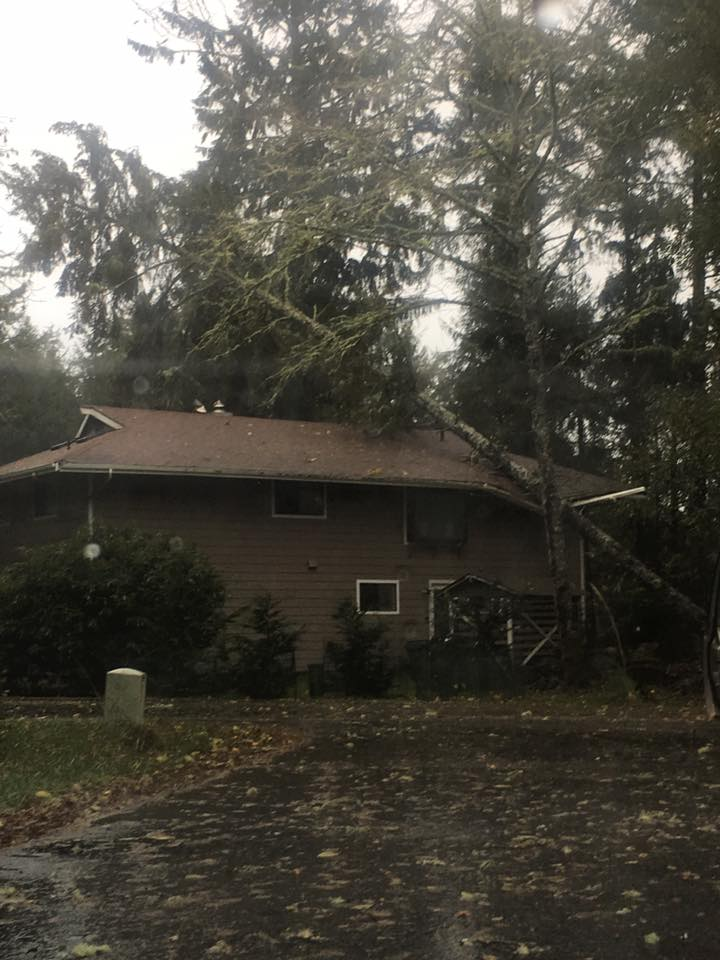 A tree crashed into a house in Ocean Shores. (Photo: Casey Tilock)<p></p>