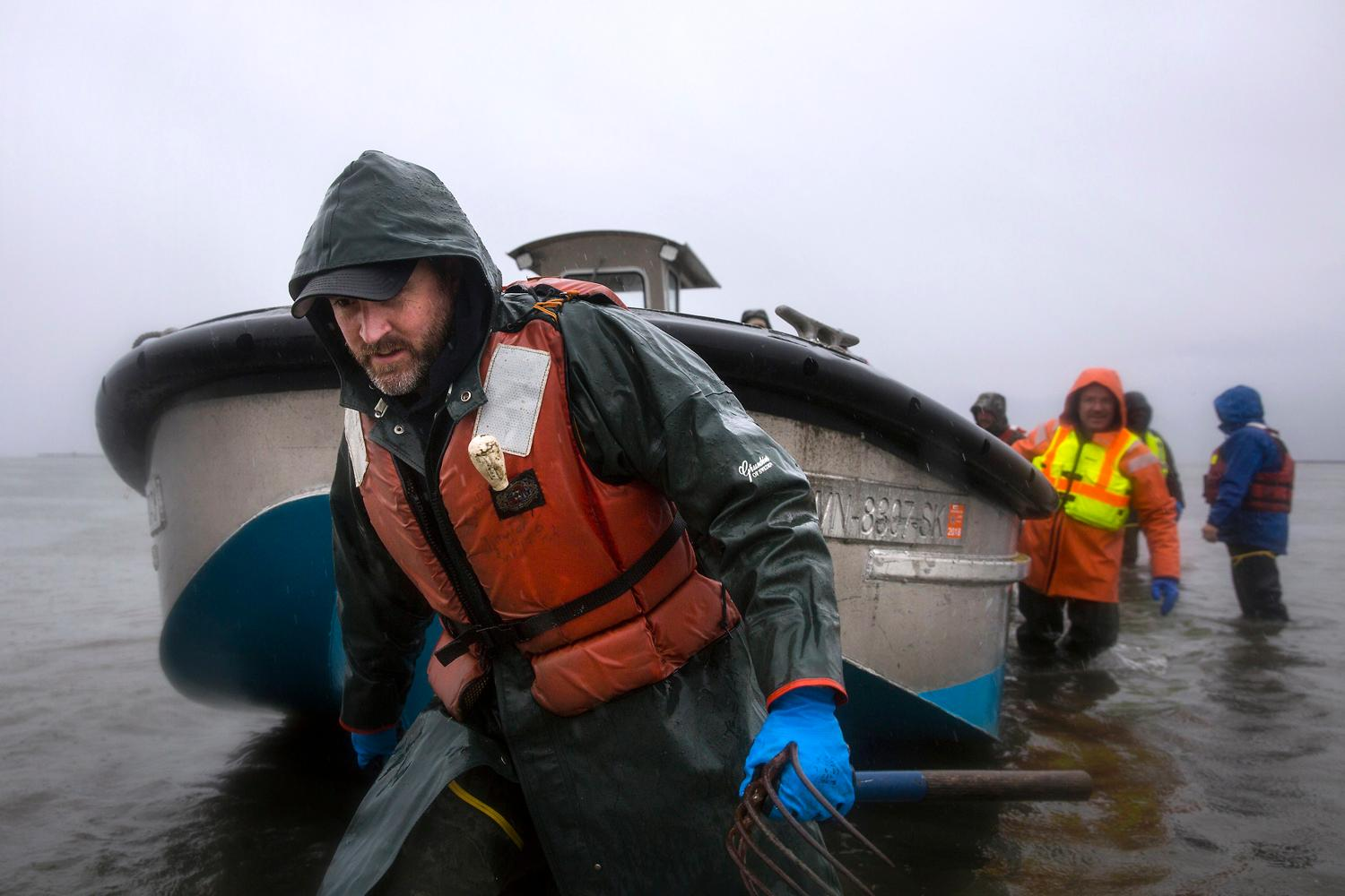 Jason Ragan, director of clam and oyster farming at Taylor Shellfish Farms, pulls a boat to shore to take workers on a tour of their Samish Bay farms, Thursday, March 22, 2018, near Bellingham. Taylor Shellfish Farms has its roots in shellfish farming in Washington State since the 1890s. You can try the tasty oysters at one of their oyster bars located in Queen Anne, Capitol Hill, Pioneer Square, or Bellevue. (Sy Bean / Seattle Refined)