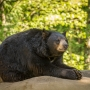 #iwokeuplikethis: Oregon Zoo's black bears waking up from winter naps
