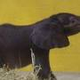 Pittsburgh Zoo's baby elephant passes away