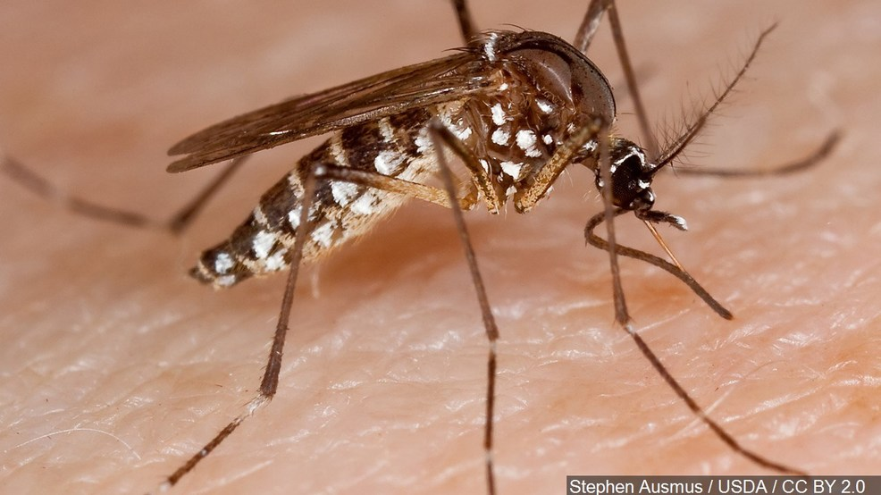 Mosquito pool in Payette County positive for West Nile virus