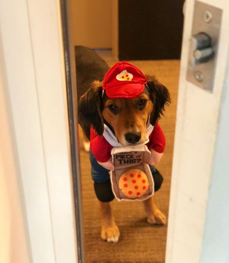 Notorious pizza delivery man?{ }(Image: via IG user @notorious_chico)