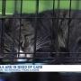 Animal rescue organizations teaming up to help with 100 plus cats removed from home