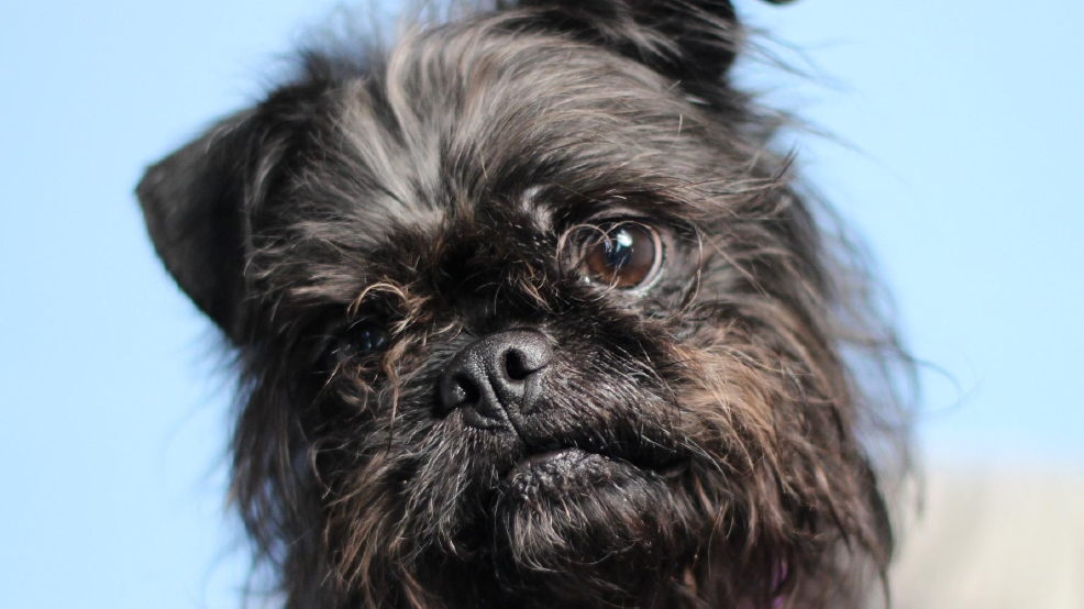 10 adoptable pets from Woodinville Homeward Pet