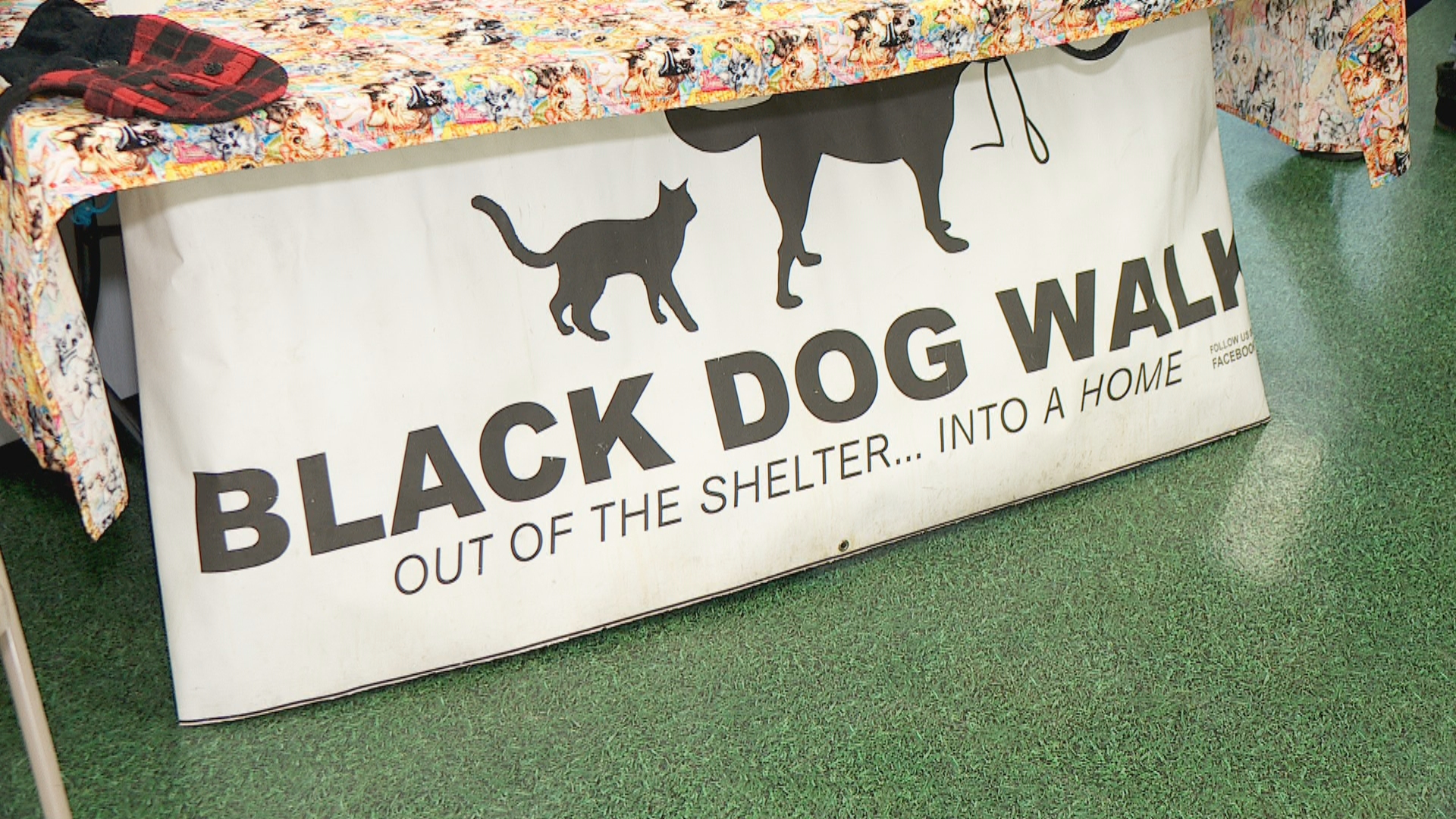 Pay it Forward: Black Dog Walk gets animals out of shelters and into homes (Photo: KUTV)