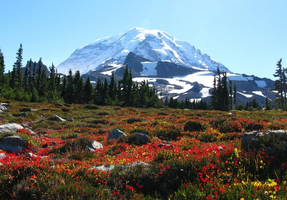 Now is a great time to see spectacular fall colors in the Pacific Northwest. The natural beauty and terrain of our area means this is a great time of year for a hike through the fall foliage.  (Image: Visit Rainier)