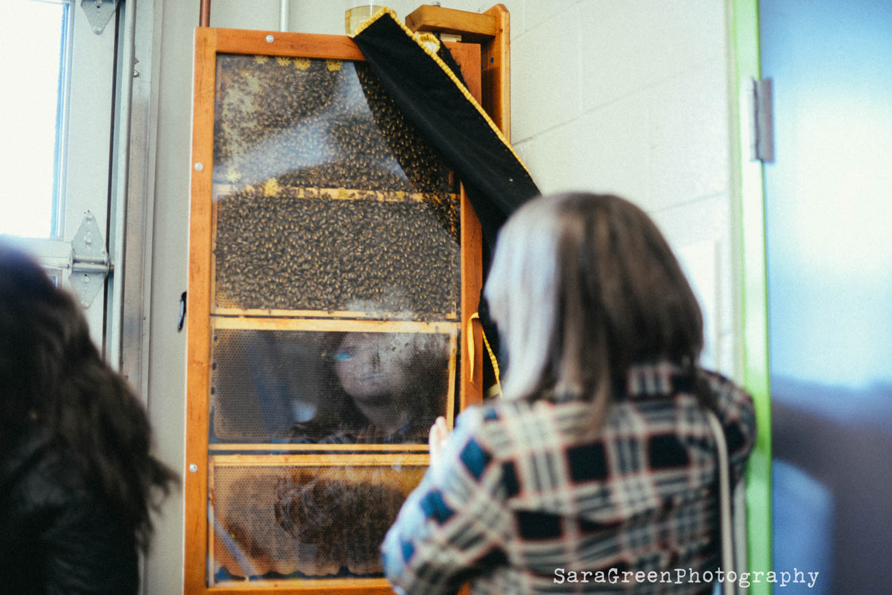 Through the year the CGC hosts a series of beginning and intermediate beekeeping classes. Learn all about the fascinating honey, how to manage a hive, and how to extract honey from your hive. / Image: Sara Green Photography // Published: 4.18.19