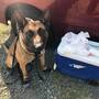Anderson police make drug arrest with help of K-9 Aero