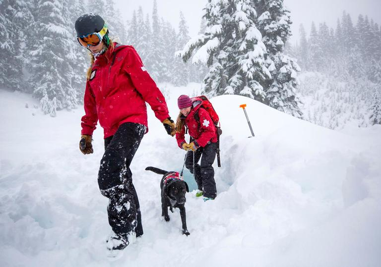 In 1993, Stevens Pass created the Avalanche Rescue Dogs program to aid in their rescue efforts for victims of avalanches and other emergencies. It takes about three years for a young pup to be ready to start saving lives. Each dog goes through a four phase training program, each phase a little more difficult than the last. Stevens Pass currently has seven dogs in operation, and have trained over 20 in the program's history. Stevens Pass Avalanche Rescue Dogs is also a member of the Back Country Avalanche Rescue K-9 (BARK) group, a statewide, non-profit, volunteer based mountain rescue organization of professional ski patrollers and avalanche rescue dogs. To support this wonderful program, there is the 4th annual Paws and Pints Benevolent Night at Icicle Brewing in Leavenworth, WA from 6-10pm on Tuesday, February 6, 2018. There will be a silent auction, raffle, this season's t-shirt for sale, and live music! Meet the Stevens Pass Avalanche Rescue Dogs and handlers from 6-7pm! (Sy Bean / Seattle Refined)