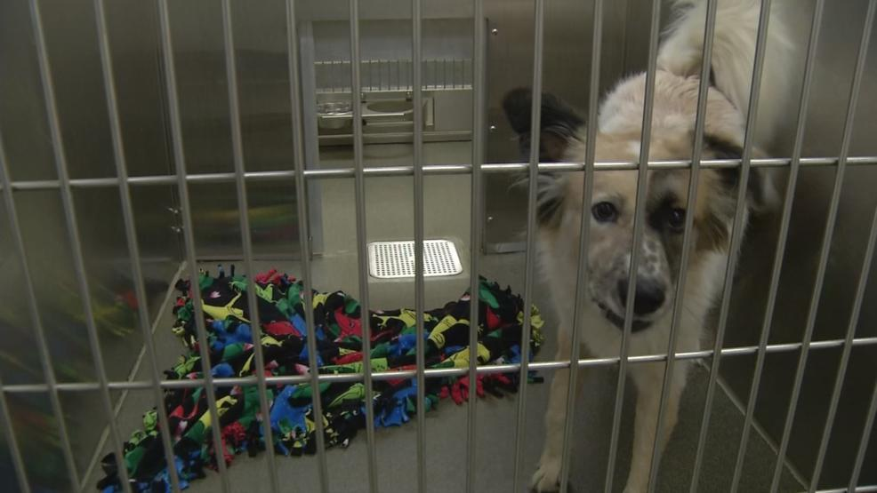 Dog at Franklin County shelter 2.jpg