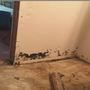 Damp weather means mold growth in homes