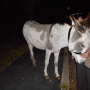 Coventry Police looking for owner of wayward donkey