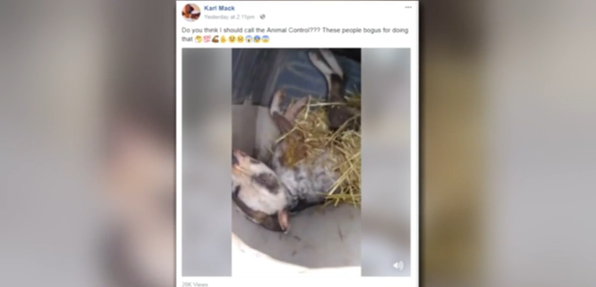 A video is circulating across central Illinois of a man finding what appeared to be a frozen dog in what he said is his backyard. (WICS)