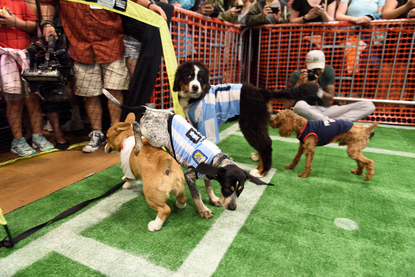 The Puppy World Cup was the cutest thing to happen in D C