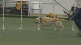 Any dog can master agility training