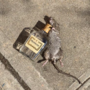 Photo of rat holding Hennessy bottle in NYC has the internet asking questions