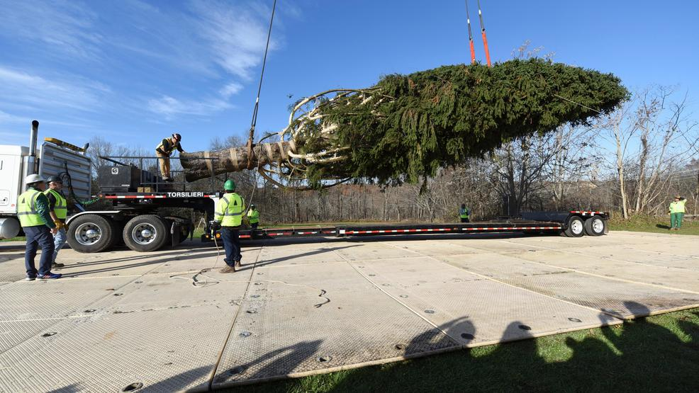 image distributed for tishman speyer this years rockefeller center christmas tree a 72 foot tall 12 ton norway spruce is craned onto a flatbed truck - Are Gas Stations Open On Christmas