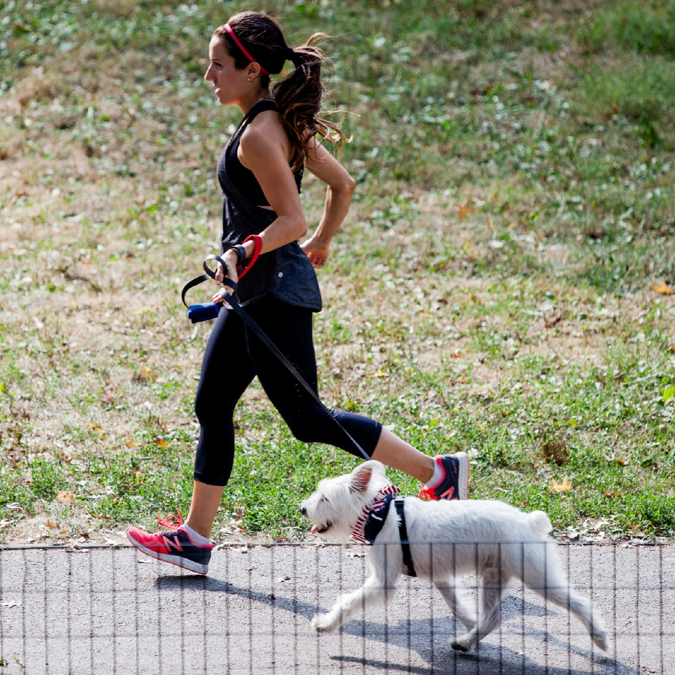If you're a runner with an energetic pup, it's a no-brainer to invite your furry friend along as you log your miles. (Photo: Robert Stoetzel of Dog & Co.)
