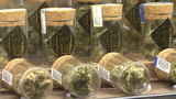 Pot growers struggle through glitches with new tracking software