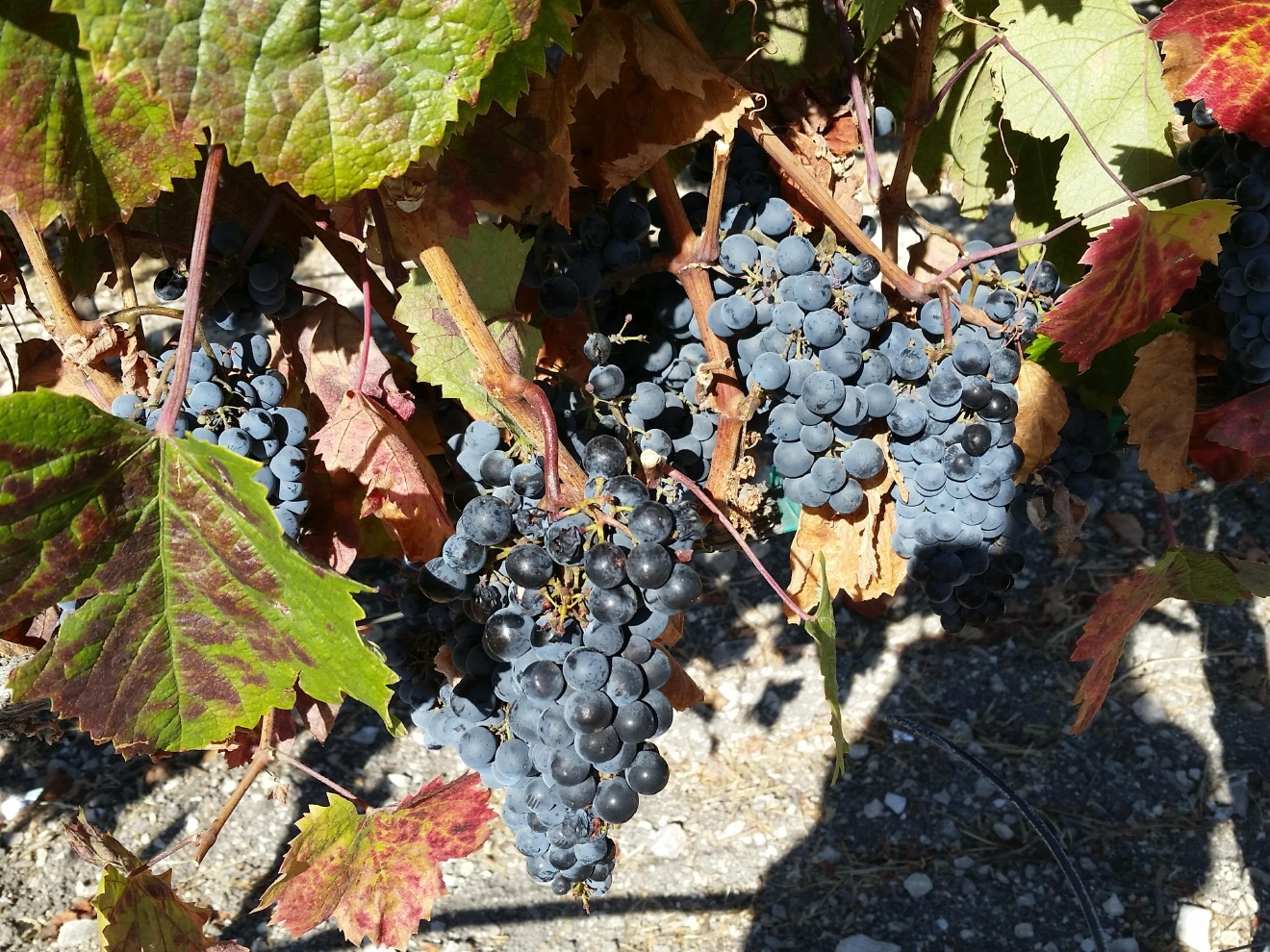 Paso Robles is a different kind of wine region -- the winemakers are collaborative and convivial, not competitive. Two-thirds of producers make five thousand or fewer cases per year, which means if you want to taste many of these wines, you need to get out there. We've got the scoop on the wineries you don't want to miss. (Image: Kelly Magyarics)