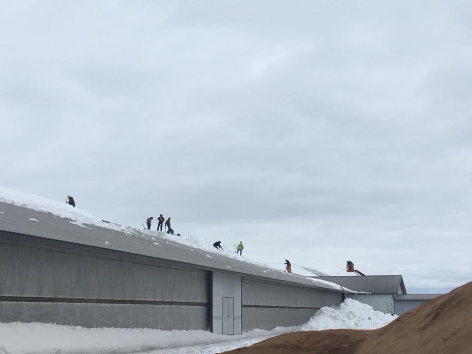 Workers clearing snow from the roof on Birlings Bovines farm. (Photo courtesy Cindy Birling)
