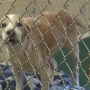 Franklin Co. Humane Society urgently needs homes for animals