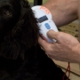 National Pet ID week encourages pet owners to use microchips