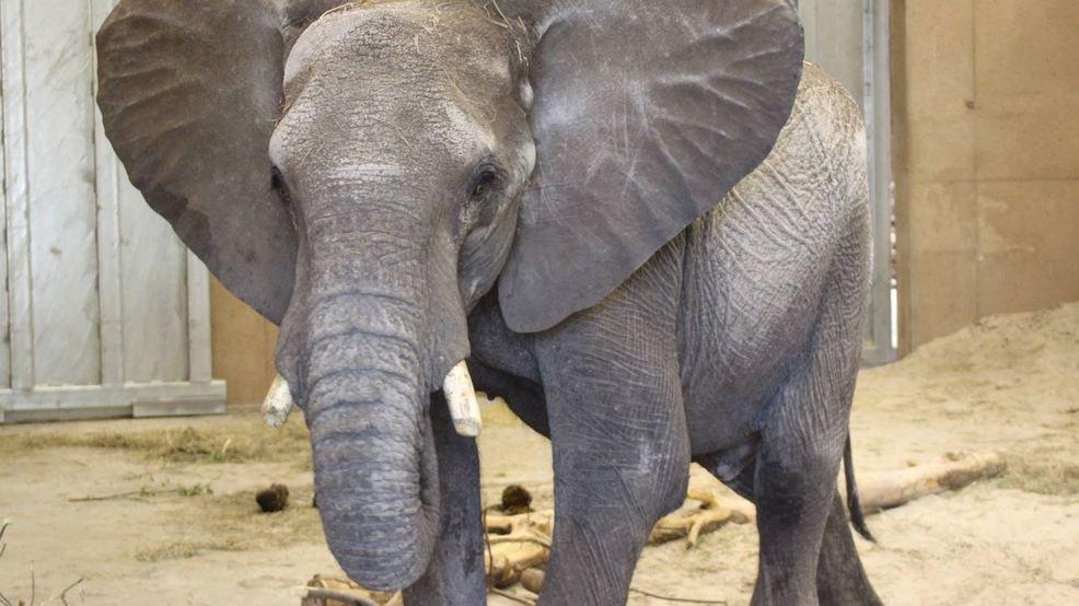 African Elephant dies at Omaha\u0027s Henry Doorly Zoo & African Elephant dies at Omaha\u0027s Henry Doorly Zoo | KMEG