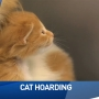 Kalamazoo Animal Rescue dealing with a lot of cats after 113 removed from home