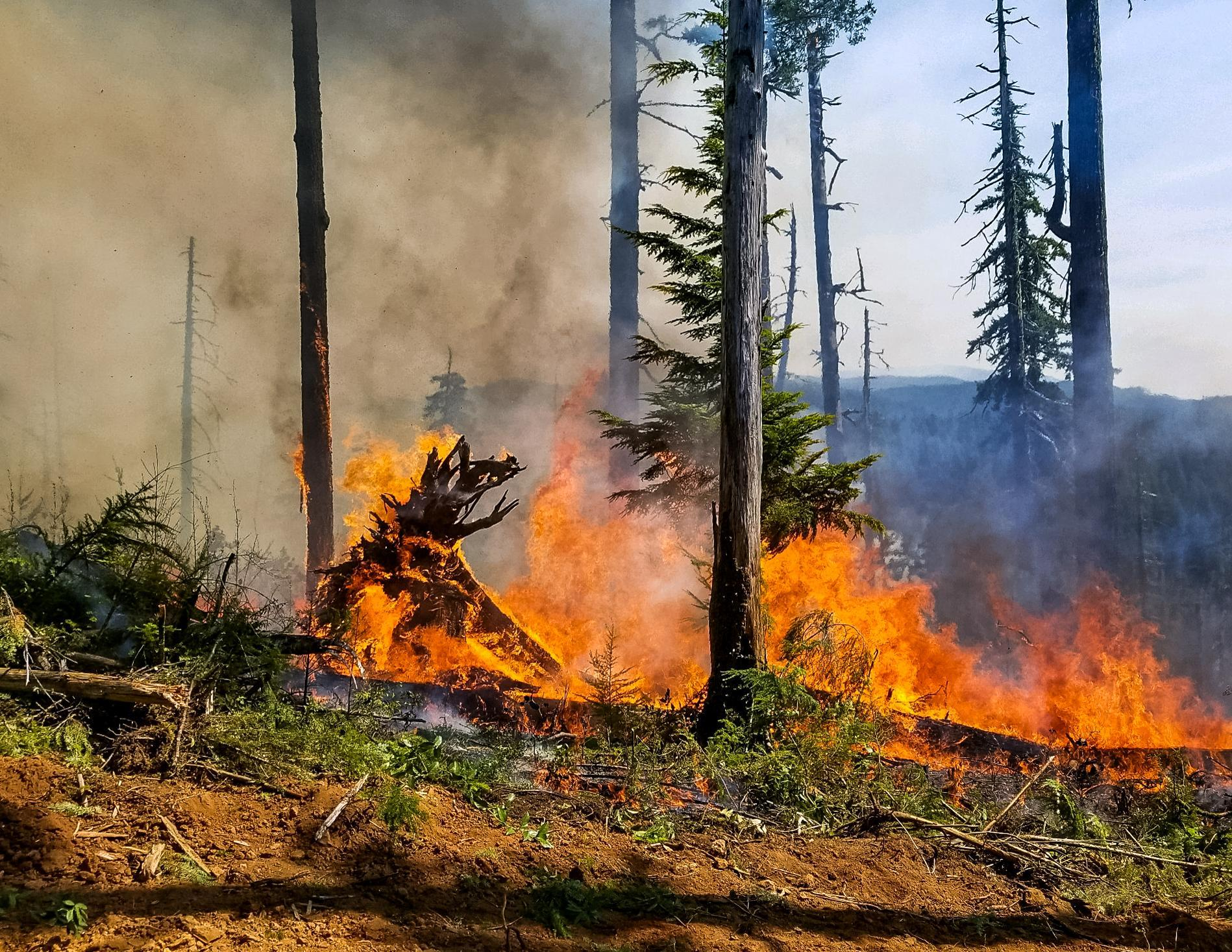 Fire burning in heavy timber and large downed wood on the Jones Fire. (InciWeb)