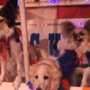 These rescue dogs are the stars of a traveling circus