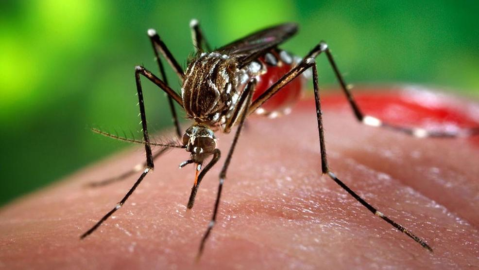city of dillon s efforts to control mosquito problem working wpde