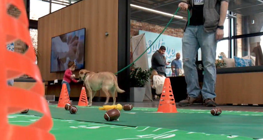 Puppy bowl today in Salt Lake City (Photo: KUTV)