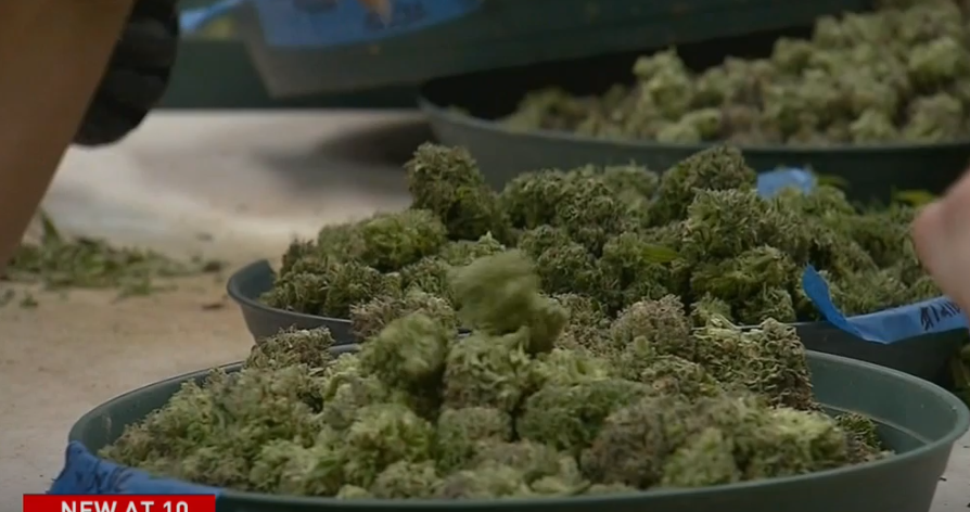 Failing to acquire a growing license, company vows to appeal state's cannabis decision. (Photo: KUTV)