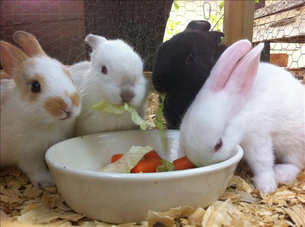 Hungry Bunnies